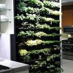Come avere un mini orto in casa?